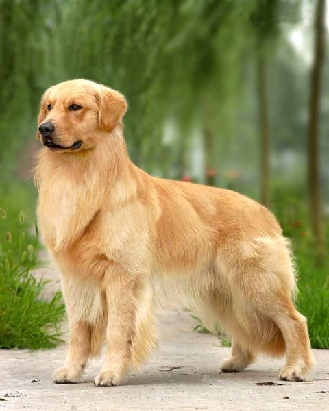 从粪便颜色知道狗狗健康状况