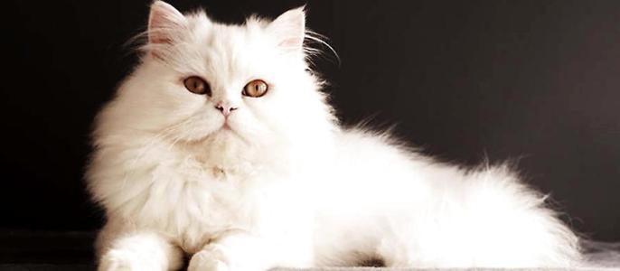 猫肛门周围有白色颗粒是怎么回事