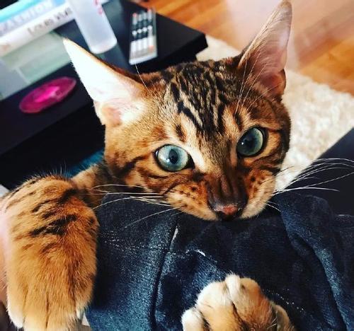 猫咪为什么会皮屑增多