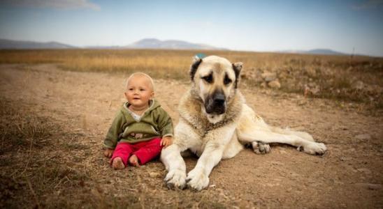 狗狗有皮屑的原因及处理方法
