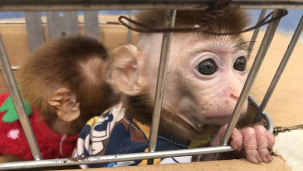 夫妻用面包和馒头诱捕捉景区猕猴 带回家当宠物