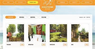 北京现星级豪华宠物酒店 城区寄养最高1天900元
