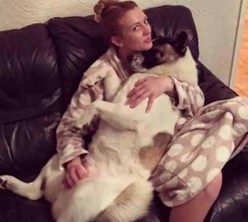 女子怀孕后宠物狗焦虑异常 没想到迎来一个惊人发现