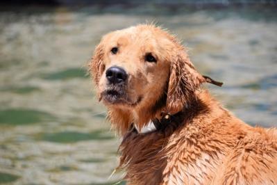 智能项圈追踪宠物健康
