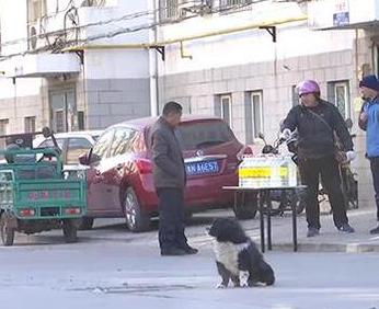 德州德棉社区9条宠物狗被毒杀 疑因狗粪致卫生脏乱