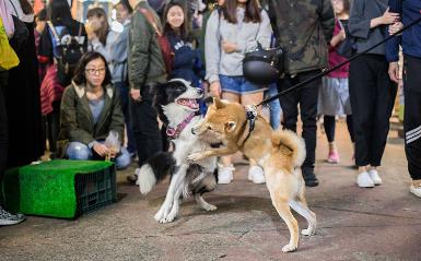 """狗狗每天帮主人""""吆喝""""卖宠物零食"""