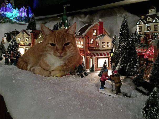 """如果家里有宠物,那过圣诞节就是一场""""灾难"""""""