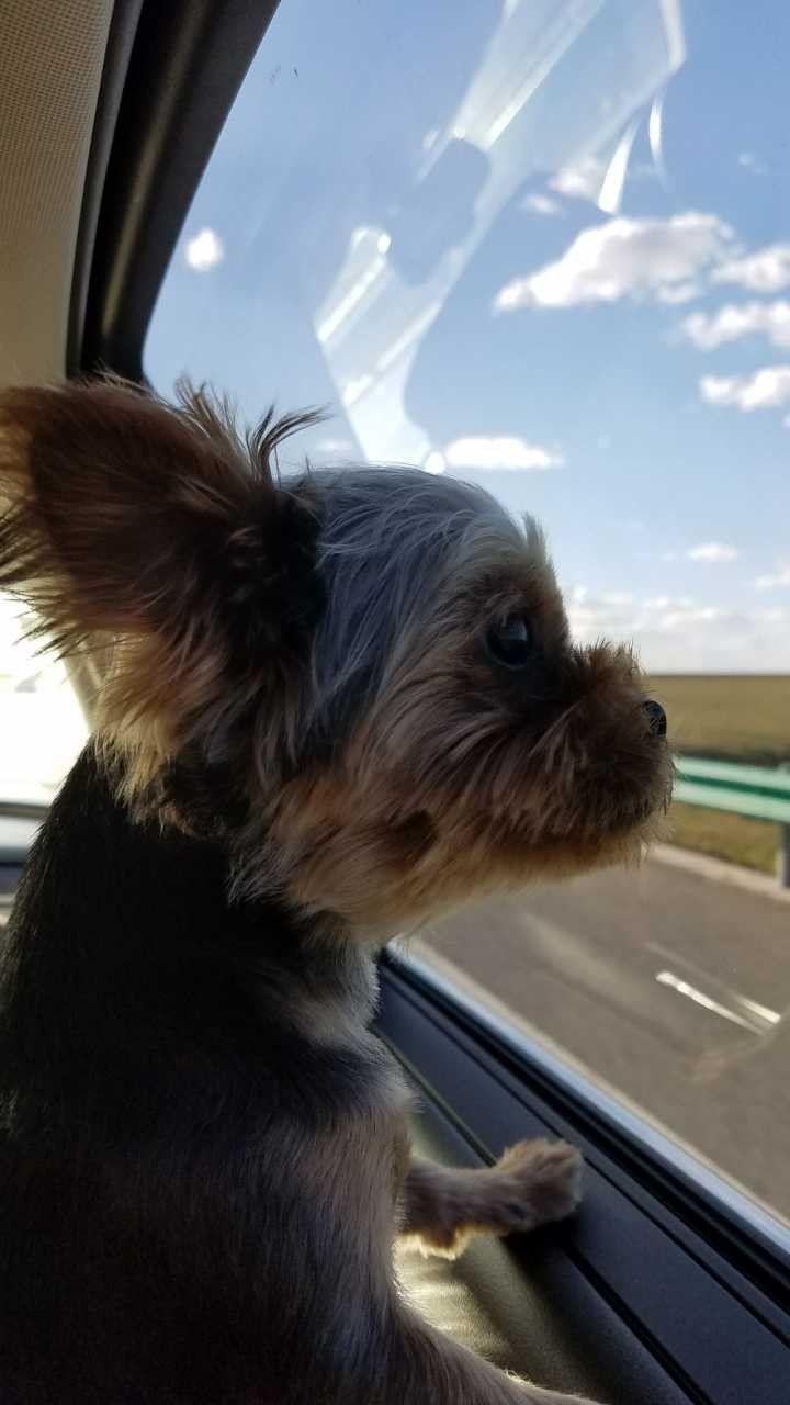 带着宠物自驾游是一种怎样的体验