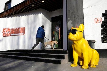 外媒:中国单身潮催生了一个175亿元的新兴宠物市场