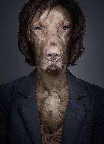 这组照片是你见过打扮最像人的宠物狗!