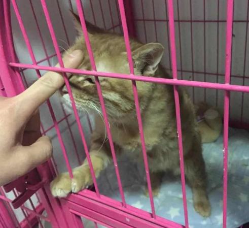 那些有关宠物的生死故事:爱会阻止我们遗忘
