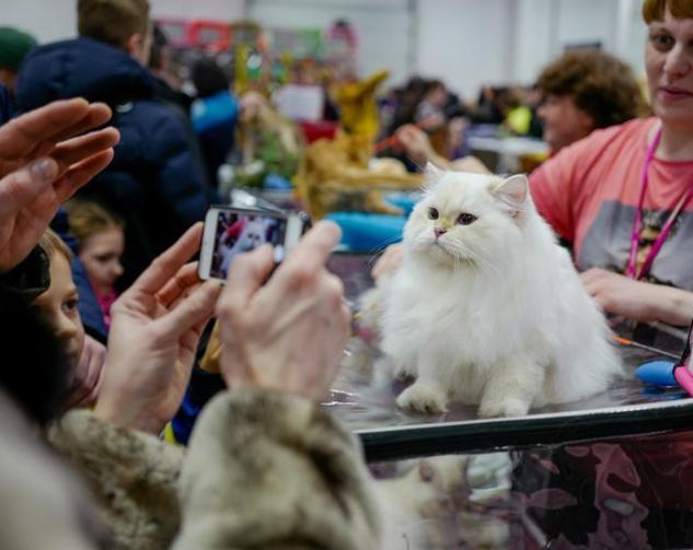 宠物猫展上的萌猫总动员