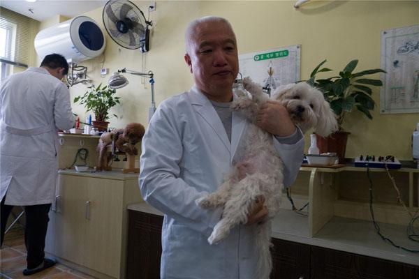 针灸烤电 上海兴起带宠物看中医