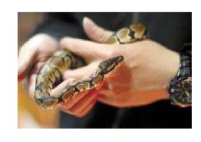 东阳小伙把蟒蛇当宠物 这下事大了