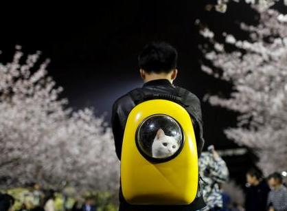 日本出现宠物侦探职业 暂未规范化、专业化