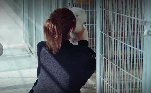 恋爱先生程皓领养的狗是什么品种 可爱宠物成助攻手