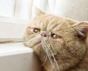宠物才是最败家的奢侈品,你养宠一年花多少钱?