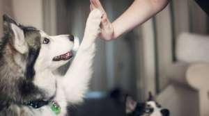 生物学家正研究宠物翻译器,让人类读懂动物语言