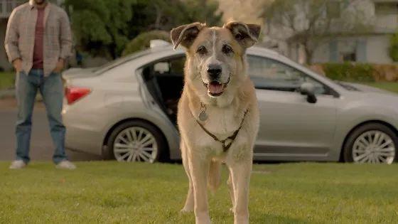 开车撞到宠物怎么办?保险到底赔不赔?