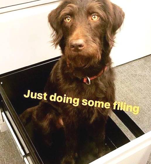 英国最可爱办公室宠物在哪里?10张照片告诉你