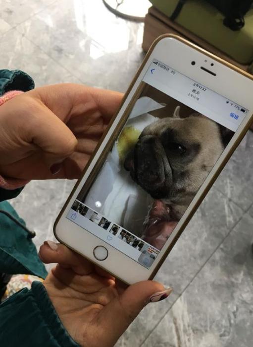 宠物狗感冒打针不久死亡 事发美联众合动物医院领秀分院
