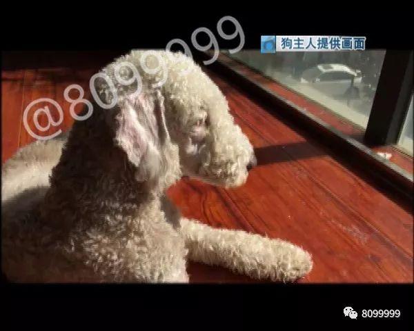 网友炸锅!昆明一女子捡到宠物犬… 后面的事让人气不打一处来