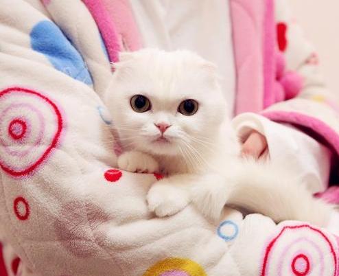 怎样将宠物从国外带回家?