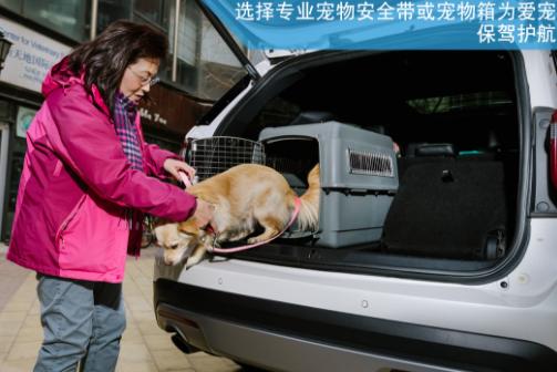 七条安全贴士 送给带宠物乘车的你