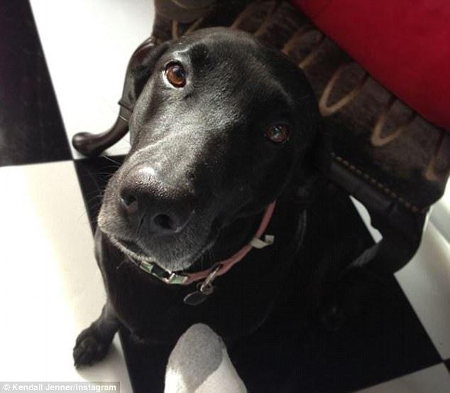 卡戴珊宠物狗不幸死亡 汤普森女友:寂寞时它不让我感到孤单