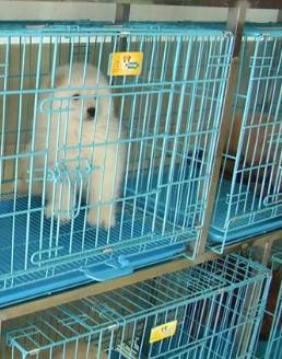 宠物狗买回家不到7天生病 送回宠物店治疗却遭掉包