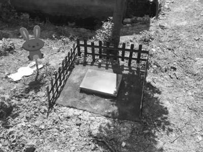 女孩成为宠物殡葬者 租百亩林地让宠物体面