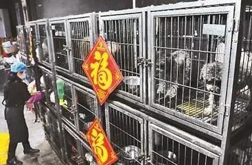铲屎官春节出门浪,宠物寄养火了……宠物店收入大揭秘,究竟有多疯狂?