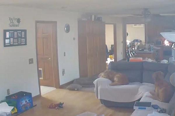 惊险!美宠物狗为偷食物点燃煤气炉引发火灾