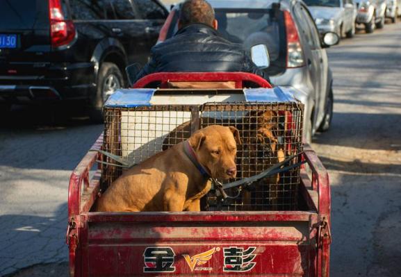 宠物市场上,大狗、小狗全是满眼的绝望,即将离别它们悲痛交加!