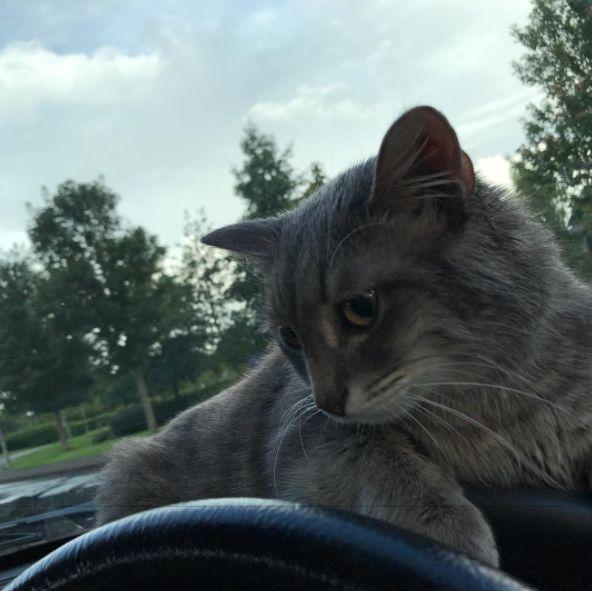 论带宠物自驾游是怎样的体验 带着猫咪去西藏