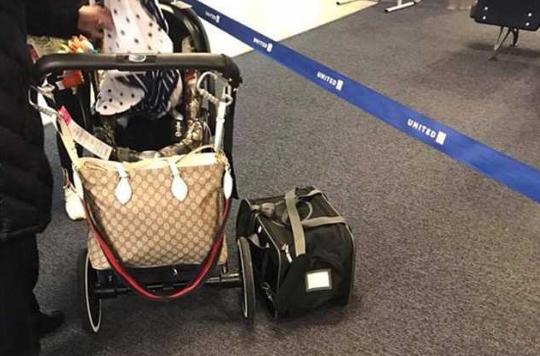 美联航坚持将10月大宠物放行李架 终致其死亡