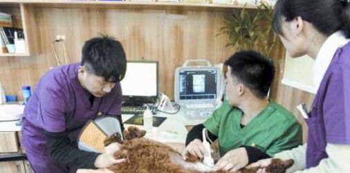 河南宠物医疗市场变化巨大 资本扎堆进入河南