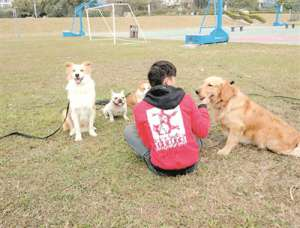 佛山消委会:宠物活体消费市场乱 买名犬一星期就死去