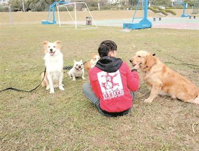 购买法斗这类名犬最好到正规狗场,购买前签好协议。(图文无关)