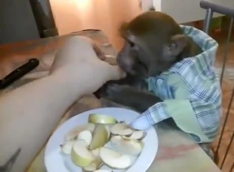 俄罗斯宠物猴干掉一杯伏特加 主人:这才叫俄国猴