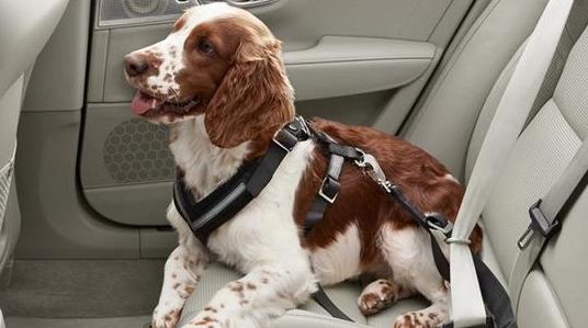 关注宠物安全 沃尔沃将为宠物打造车载安全产品