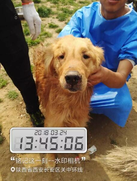87只被盗宠物运至西安被拦截 川陕志愿者急寻主人