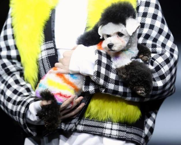 模特怀抱宠物犬登T台秀时装