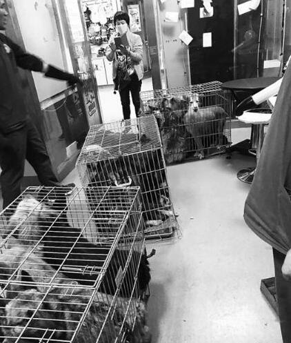 主人快来领回家!20只宠物犬竟被当肉犬卖 幸被动保中心解救