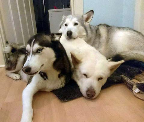 英宠物摄影大赛揭幕 两犬相依而憩照夺魁