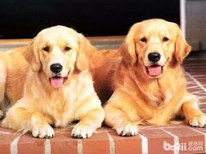 狗狗能吃粽子吗