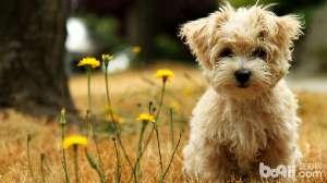 对于狗狗来说,要每天吃蔬菜吗