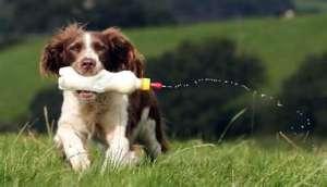 狗狗奶瓶怎么用