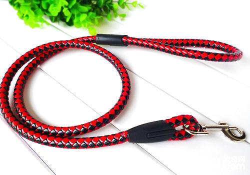 牵引绳是养狗的必备物