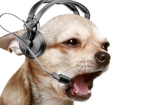 不同类型的音乐对狗狗的影响不同